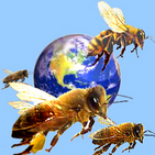 Bees around the world